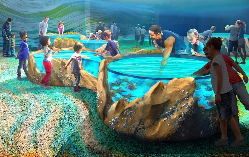 St Louis Aquarium interactive exhibits