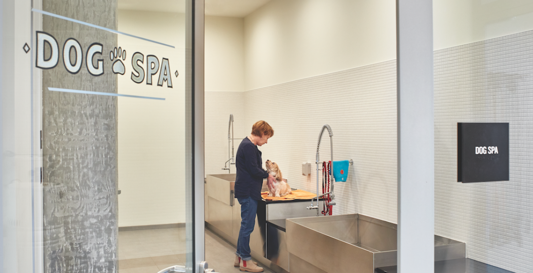 The 240-sf dog spa at Seattle's AMLI Arc apartment tower, photo by Benjamin Benschneider